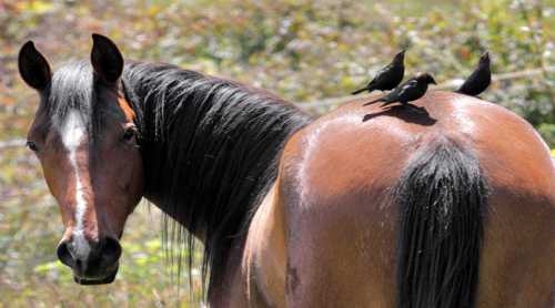 лошадь не дышит ртом