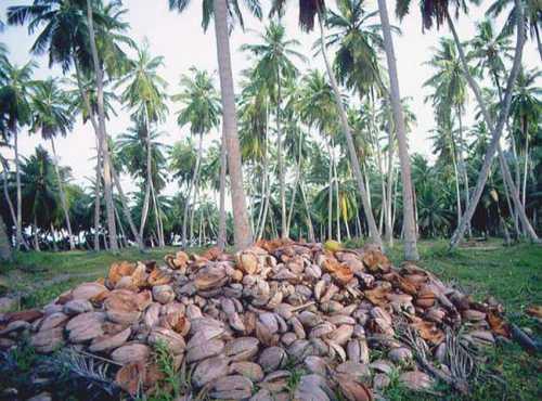 сейшельские острова отдых на сейшелах